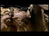 BBC Прогулки с динозаврами. Серия 1